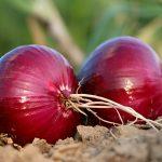 manfaat bawang merah mentah
